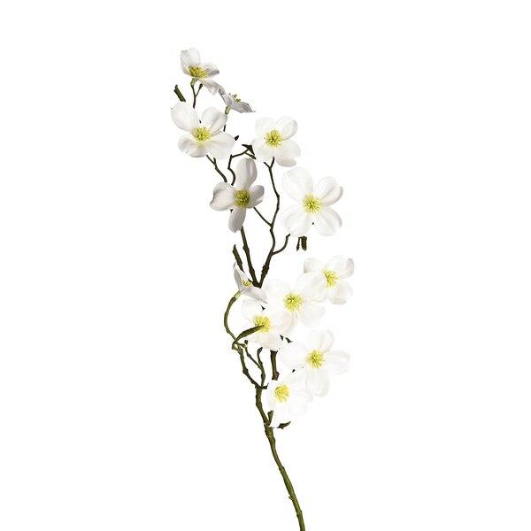 Stielblume Kirschblüte, weiß