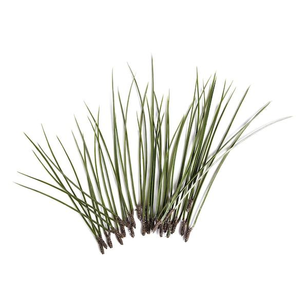 Kiefernpick, grün