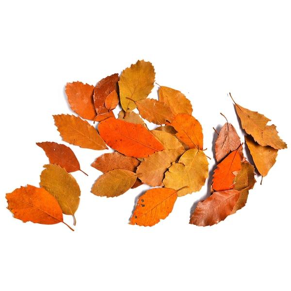 Streuartikel Herbstblätter, rost