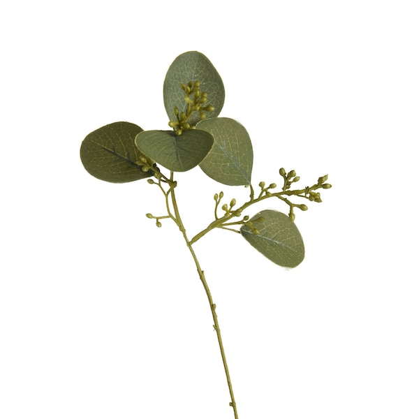 Zweig Eukalyptus, grün