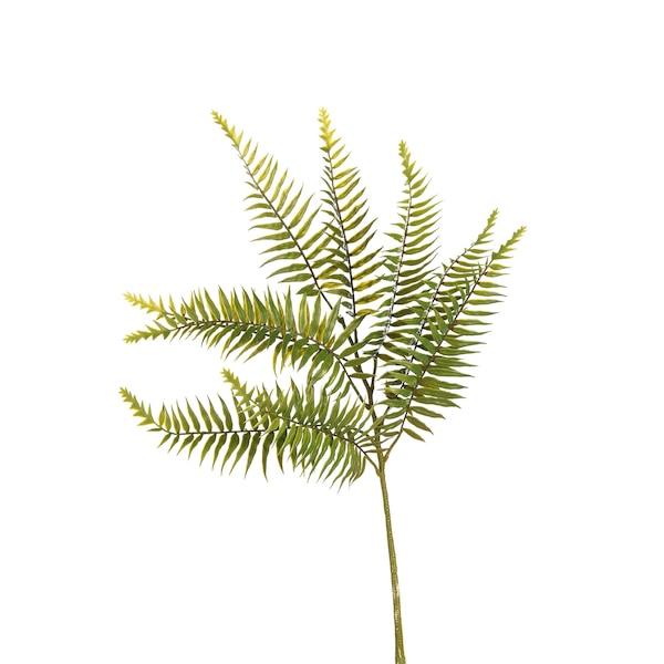 Stielblume Farn, grün