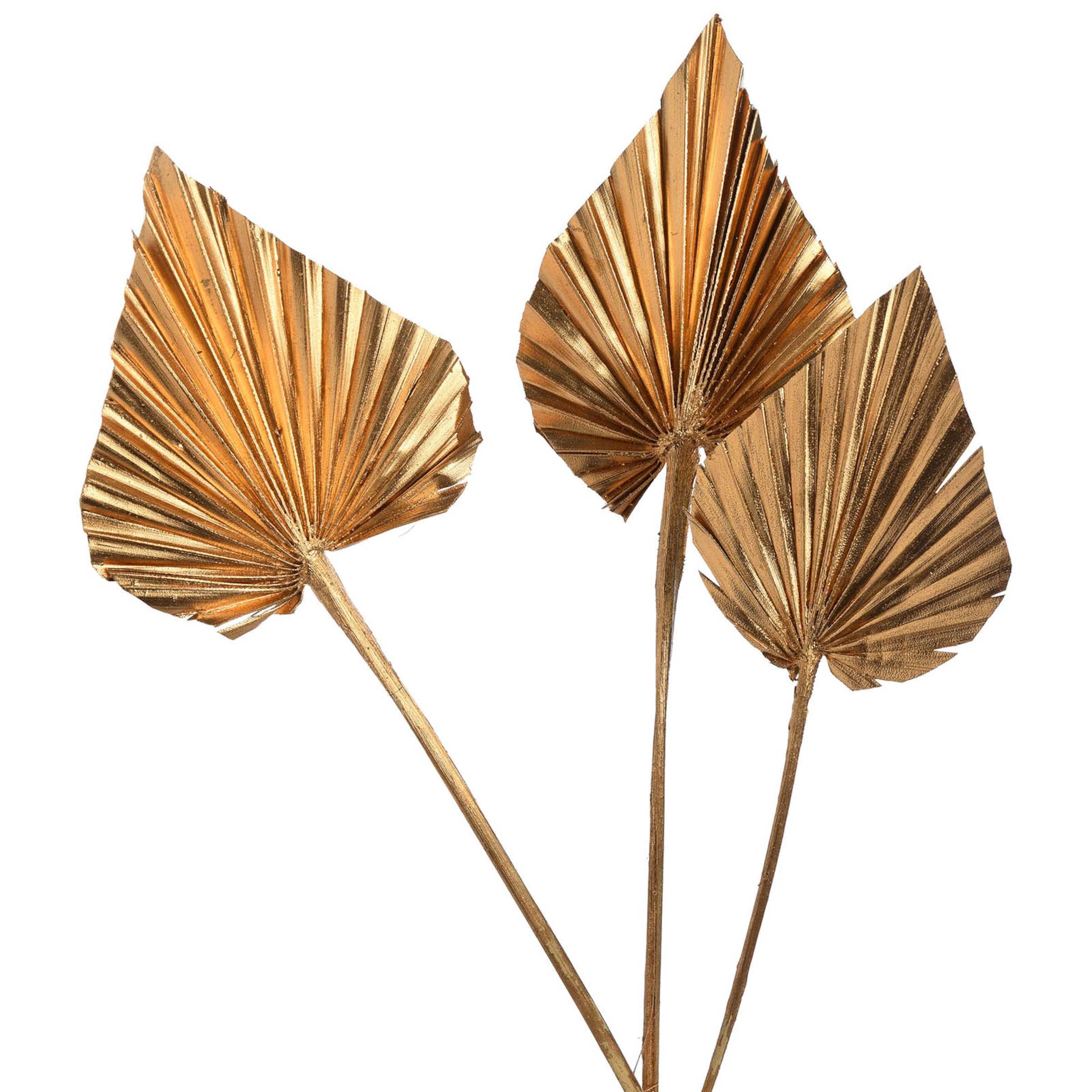 Trockenblume Palmleaf ca.40cm 3Stk, gold
