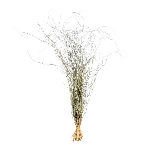 Bündel Gras, zartgrün