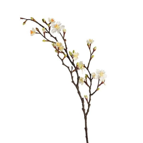 Zweig Kirschblüte, weiß