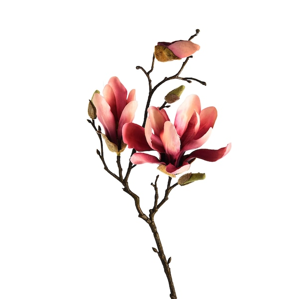 Zweig Magnolie, pink