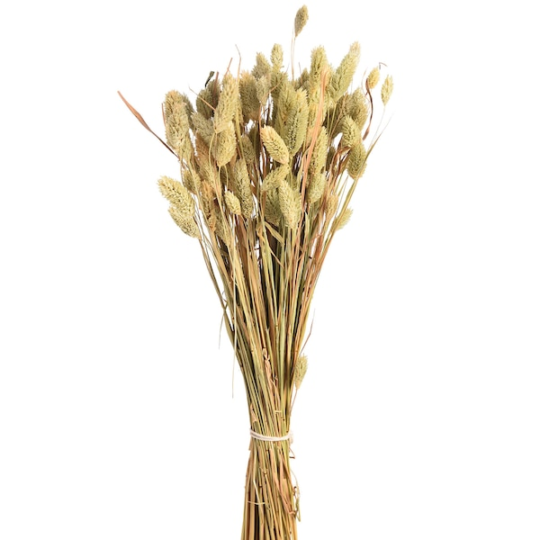 Blumenbündel Samtgras, natur