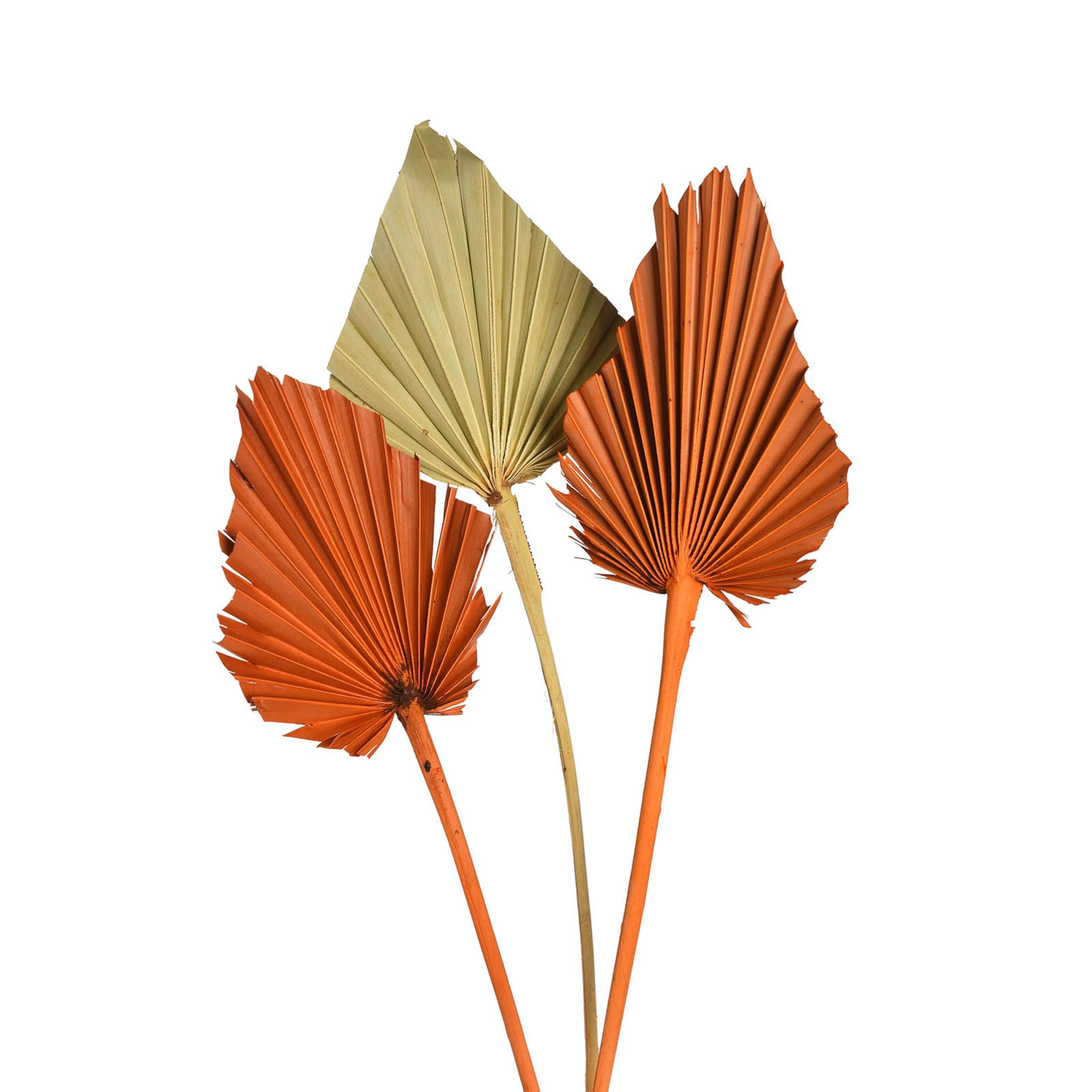 Trockenblume Palmleaf ca.40cm 3Stk, bunt