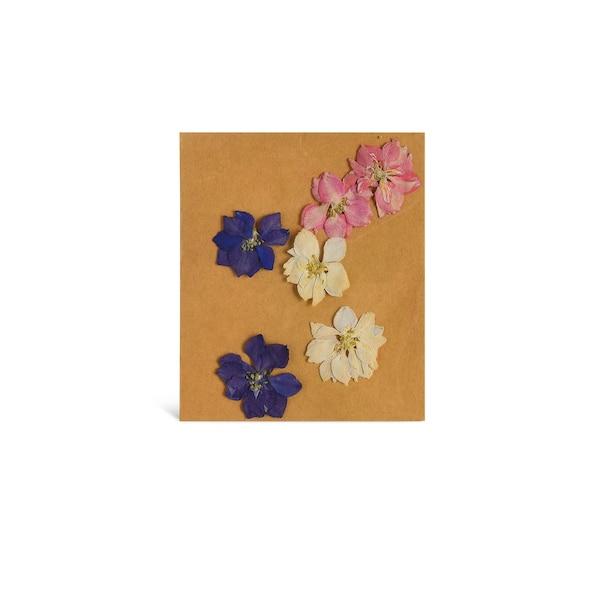 Frühlingsblumenmix, gepresst, pastell