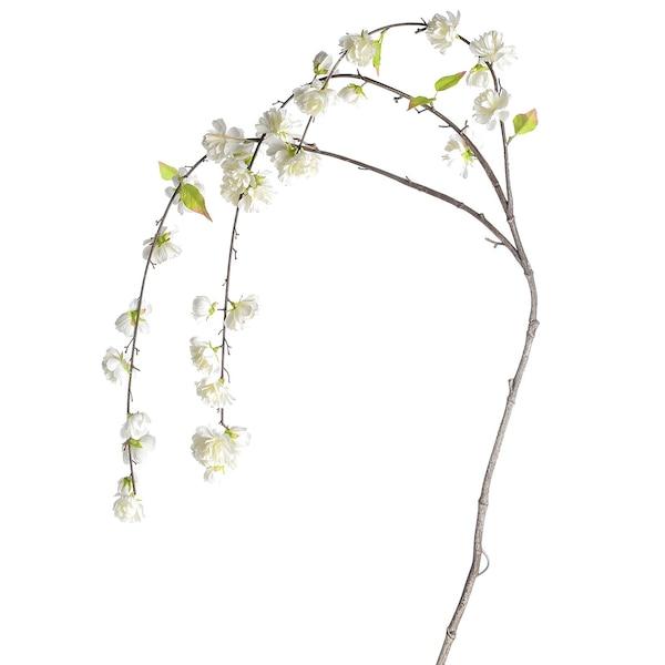 Ast Kirschblüte, weiß