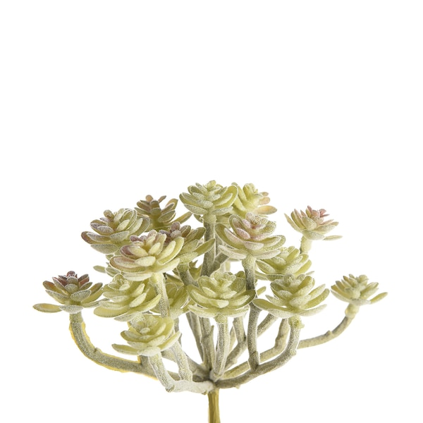 Blumenpick Sukkulente, hellgrün