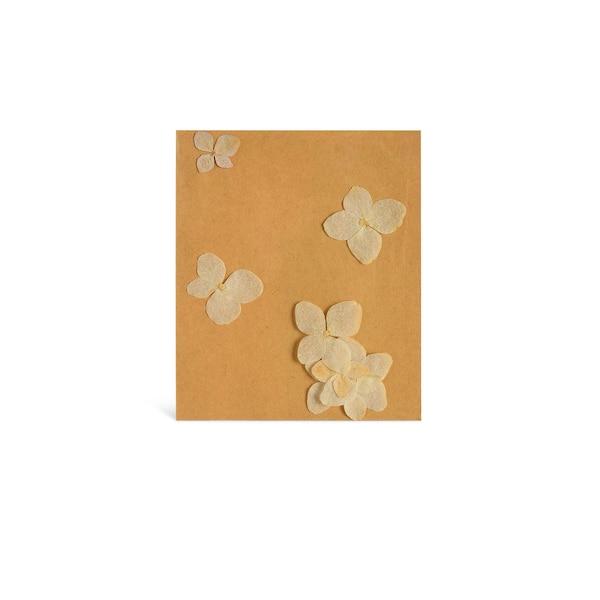 Hortensienblüten, gepresst, creme