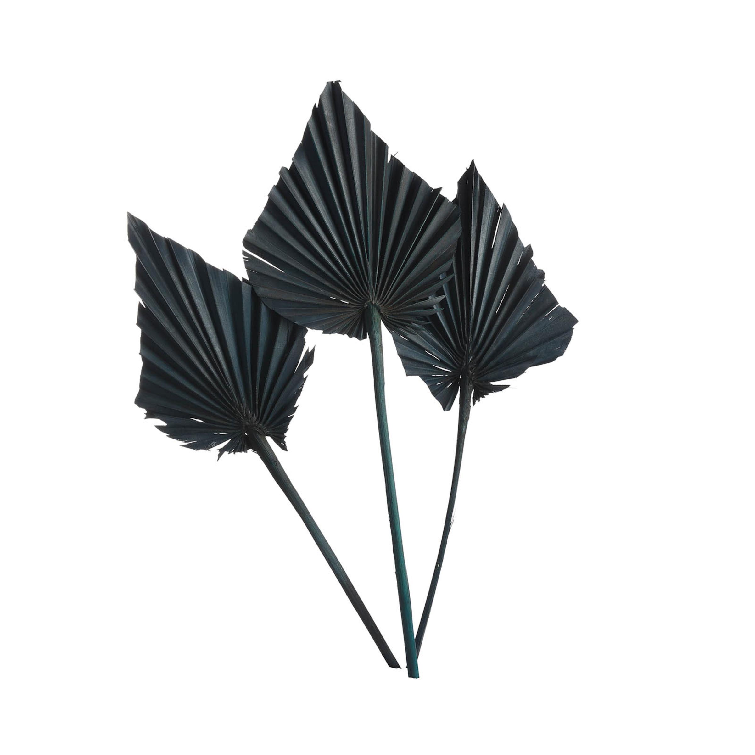 Trockenblume Palmleaf ca.40cm 3S, petrol