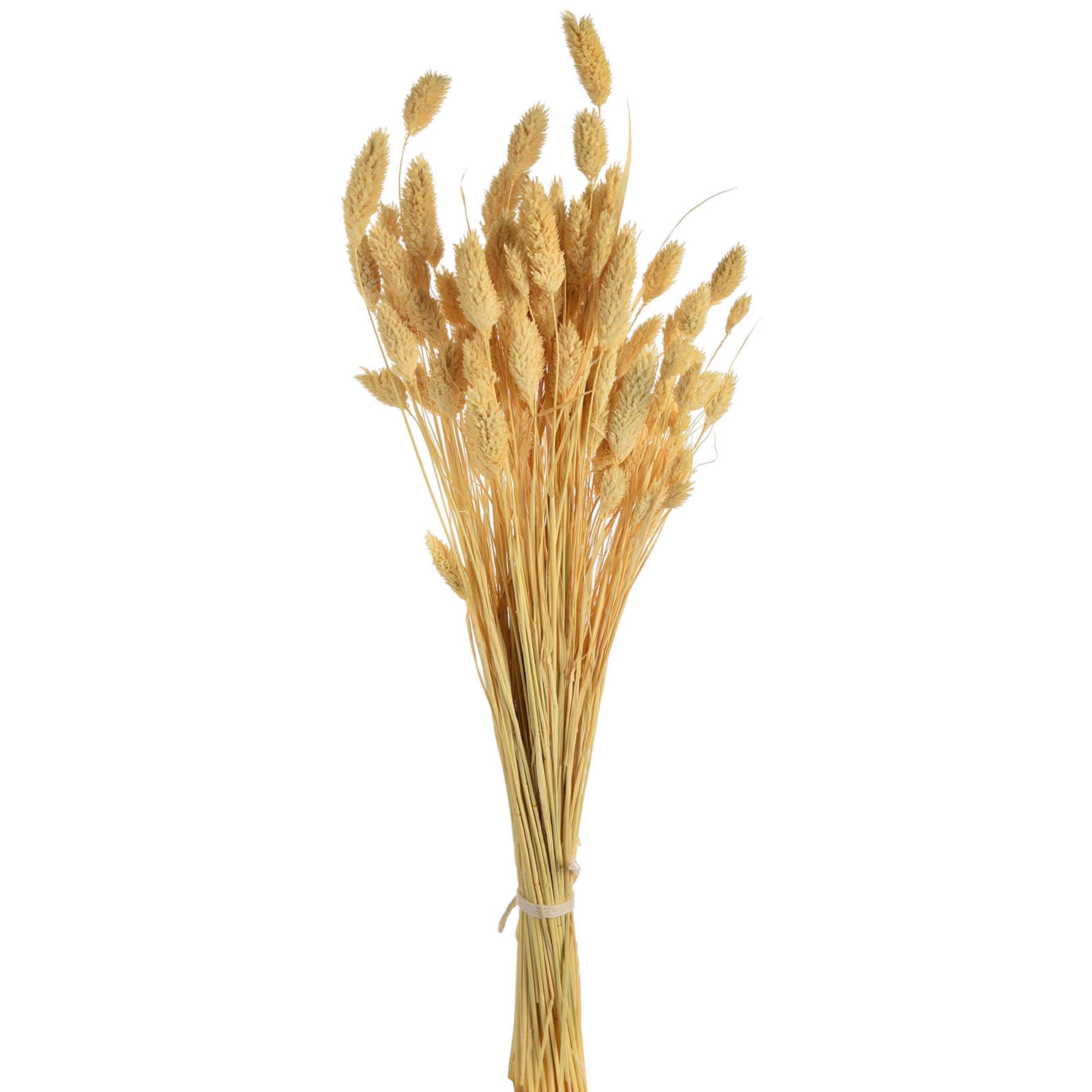 Blumenbündel Samtgras 60cm, offweiss