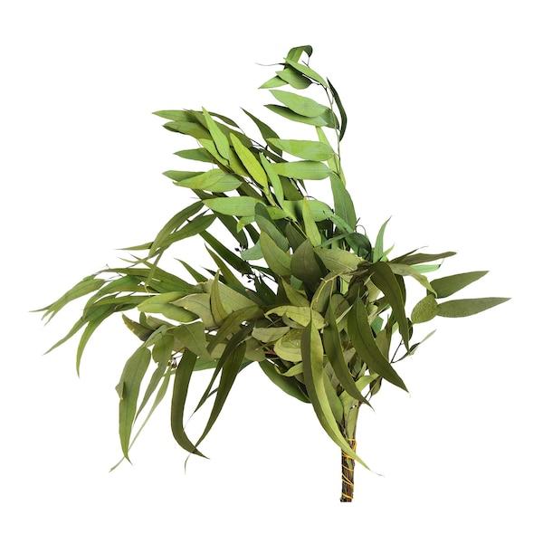 Strauß Eukalyptus, spitz, zartgrün