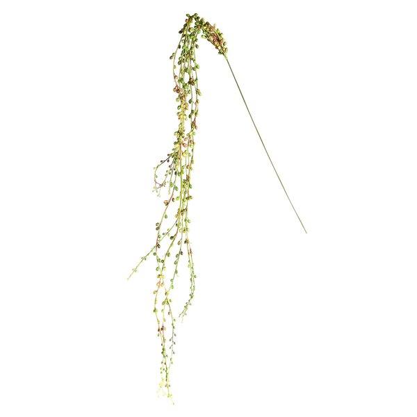 Blumenpick Senecio , grün