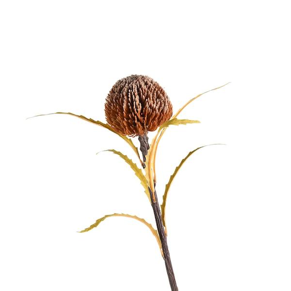 Kunstblume Banksia, natur