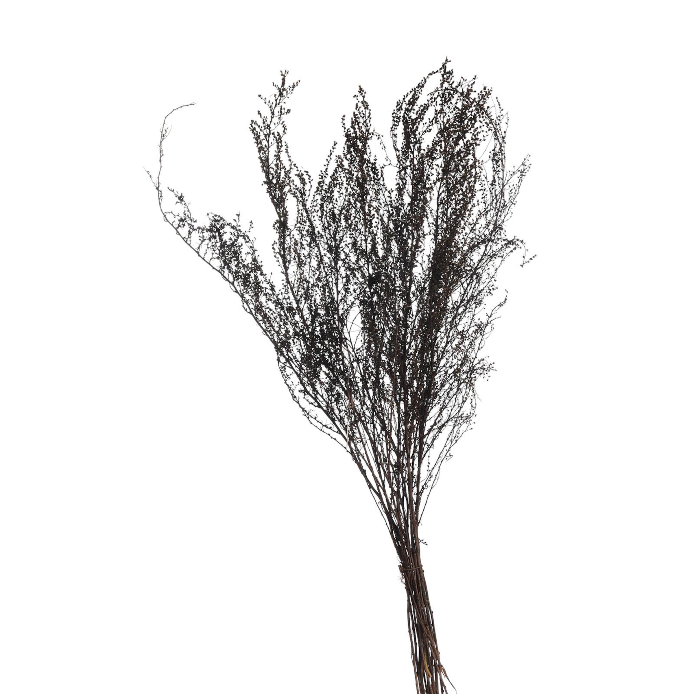 Trockenblume Solidago ca.50cm, schwarz