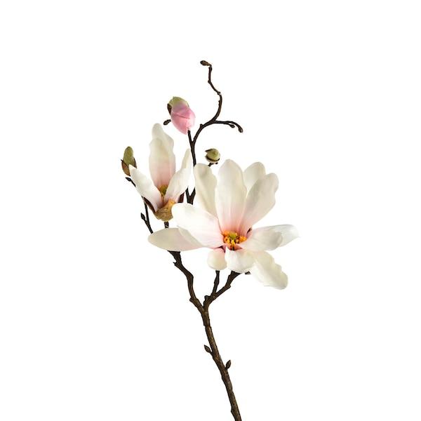 Zweig Magnolie, rosa