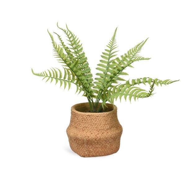 Topfpflanze Farn, natur