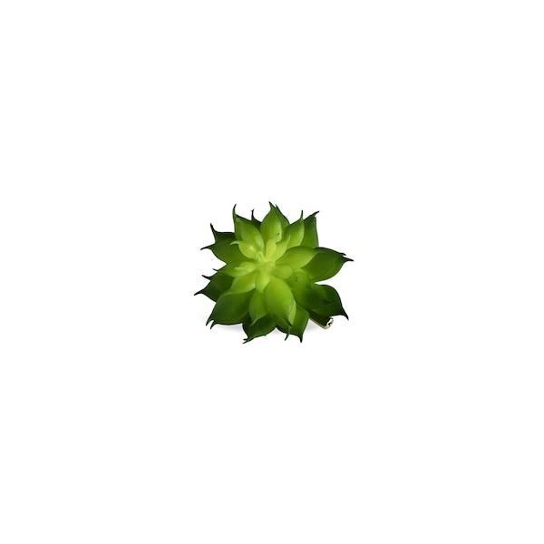 Sukkulente auf Clip, grün