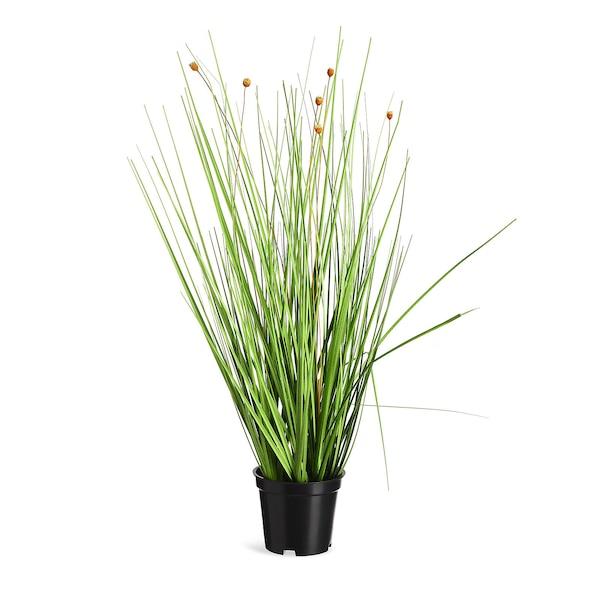 Grasbusch im Topf, grün