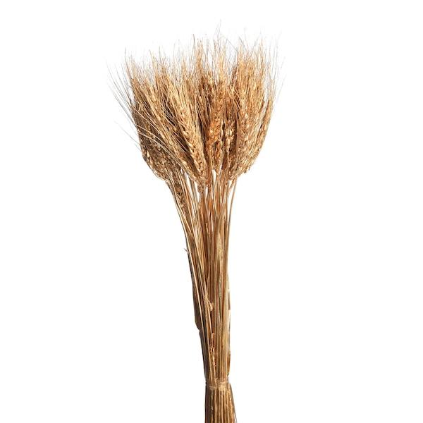 Trockenblumen-Bündel Ähren, gold