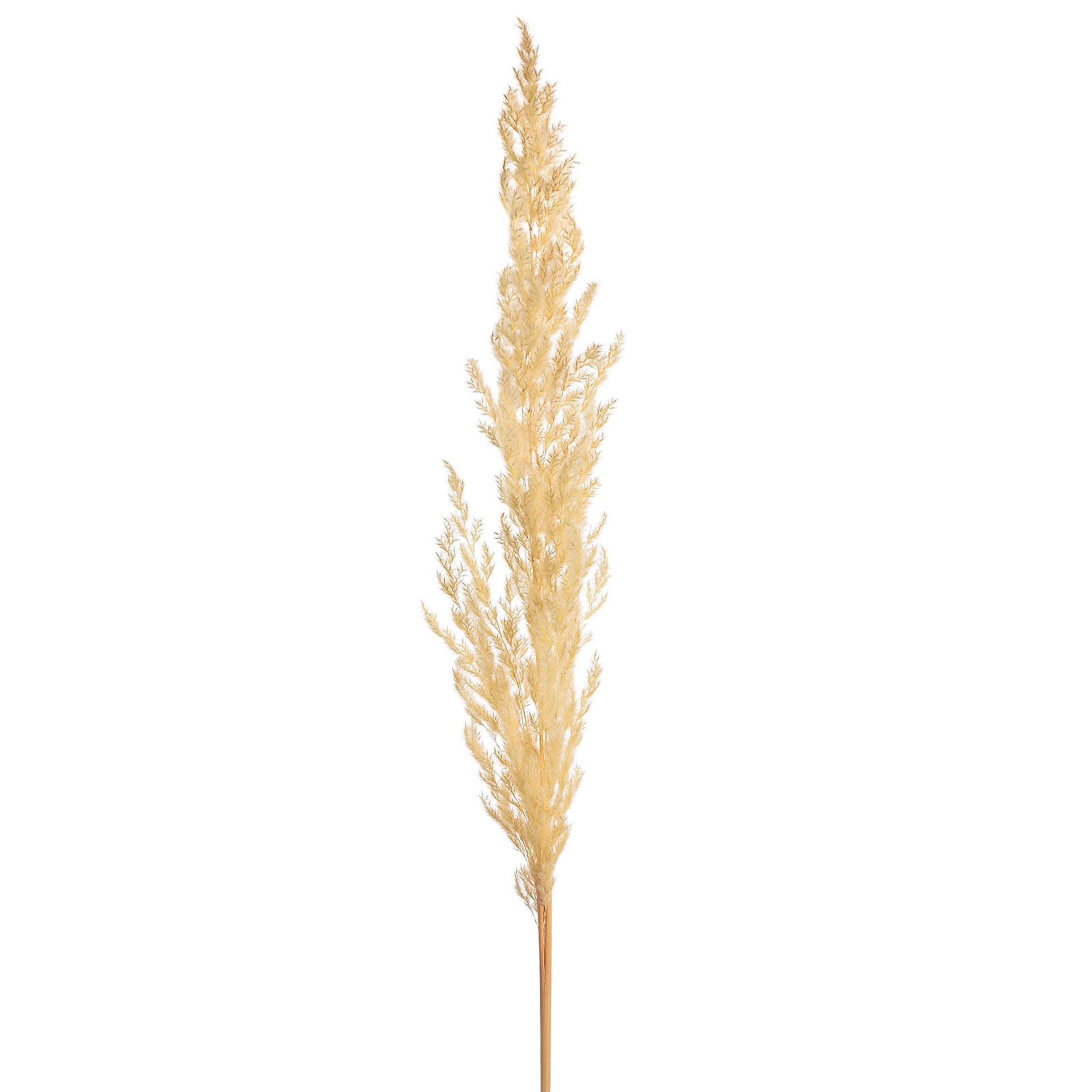 Pampasgras, L:90cm, weiß