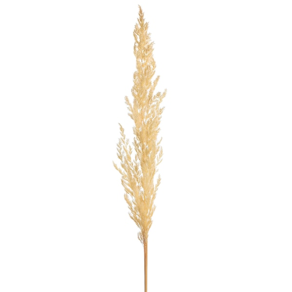 Pampasgras, weiß