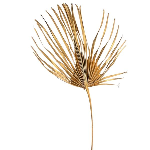 Trockenblume Plamenblatt XXL, gold